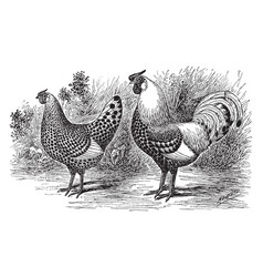 Pair of silver spangled hamburgs vintage vector