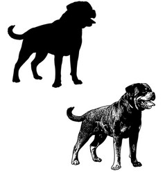 Rottweiler dog silhouette and sketch vector