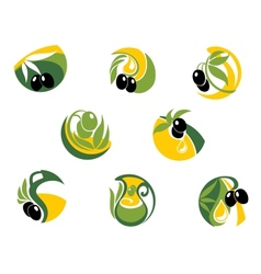 Green and black olives elements vector image