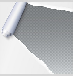 realistic torn open paper with space for text on vector image