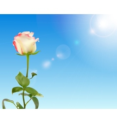 Beautiful rose against shiny sky vector