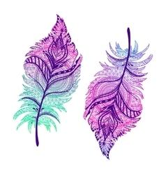 beautiful Boho feathers vector image