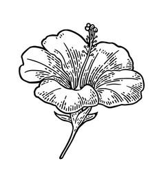 hibiscus flower black engraving vintage vector image vector image