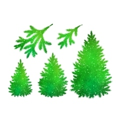 Spruce trees and branches collection vector