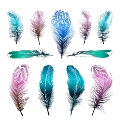 Set of four straight feathers vector