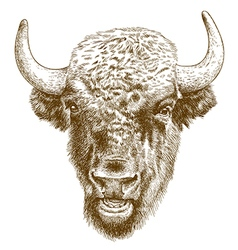 Engraving bison head vector