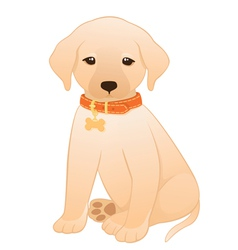 Labrador retriever puppy vector