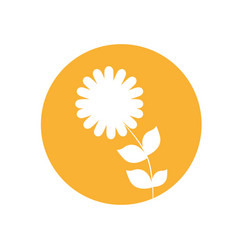 dahlia flower natural icon vector image vector image