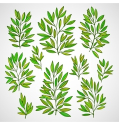 Set of branches with green leaves vector image vector image