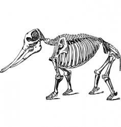 animal skeleton vector image