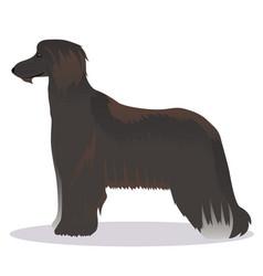 Afghan hound black vector