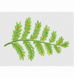 Leaves with little seeds vector