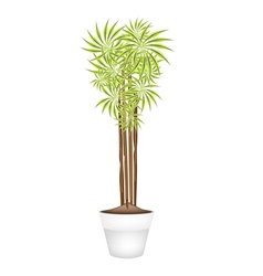 Yucca tree and dracaena plant in ceramic pot vector