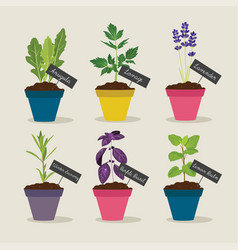 herb garden with pots of herbs set 4 vector image