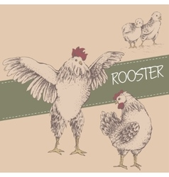 front rooster and brood vector image vector image