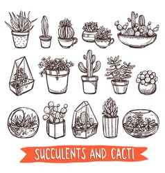 Succulents and cacti sketch set vector