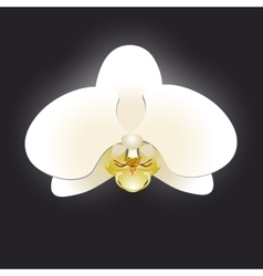 White orchid isolated on a black background vector