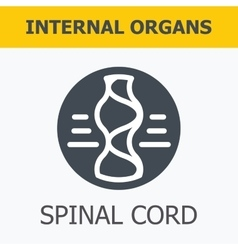 Internal organs - spinal cord vector