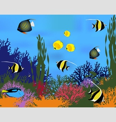 Coral fish vector image