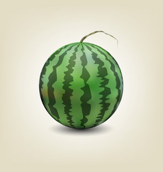 photo realistic watermelon vector image