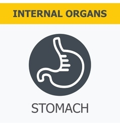 Internal organs - stomach vector