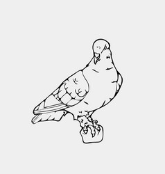 hand-drawn pencil graphics small bird dove pigeon vector image vector image