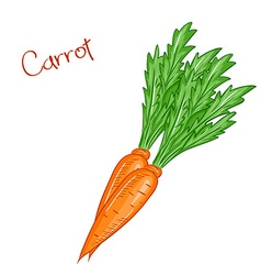 isolated cartoon fresh hand drawn carrot vector image vector image