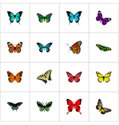 Realistic monarch butterfly tropical moth and vector