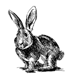Hand sketch rabbit vector image