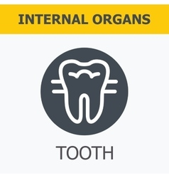 Internal organs - tooth vector