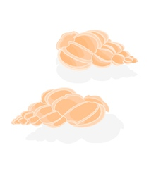Seashells marine life vector