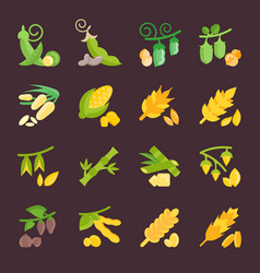 Set flat icons of beans and cereals vector