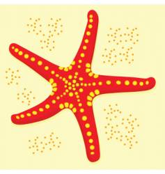 Star fish vector