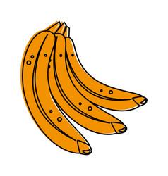 Delicious bananas fruits vector