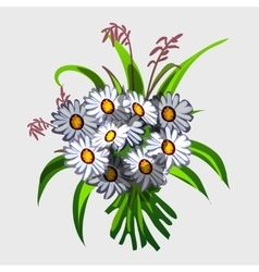 Bouquet of white wildflowers vector