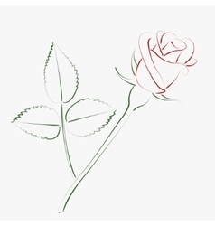 Sketched rose vector