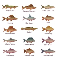 Set of most popular freshwater fishes vector