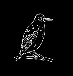 hand-drawn pencil graphics small bird starling vector image vector image
