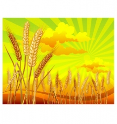landscape with wheat vector image vector image