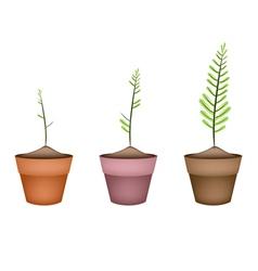 Three fresh green ferns in ceramic pots vector