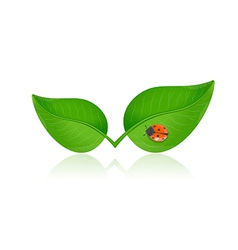 Green leaf with ladybird vector image vector image