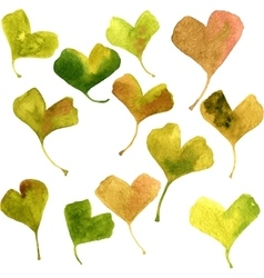 Watercolor green leaves of ginkgo vector
