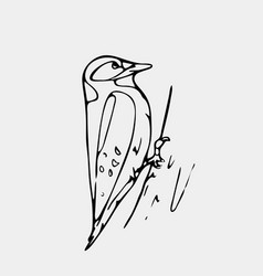 Hand-drawn pencil graphics small bird starling vector