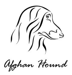 Afghan hound vector