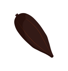 Cocoa fruit isolated vector