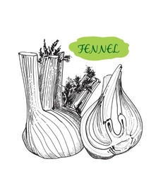 Fennel vector image