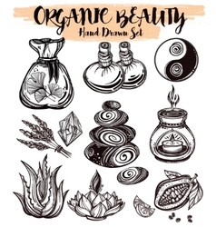 Hand drawn organic medicine herbs and healing set vector image