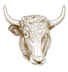 engraving yak vector image