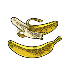 whole and half peeled banana black vintage vector image