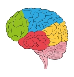 Human brain icon vector